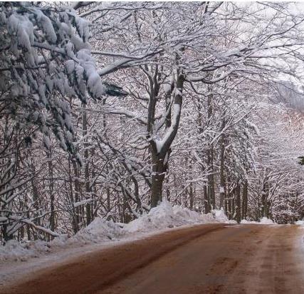 Ritorna la pioggia e da dicembre aria fredda dal Polo Nord  che porterà l'inverno